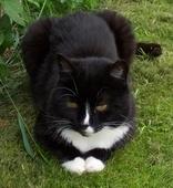 Pussus Cattus Green
