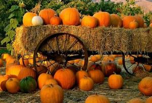 halloween pumpkins - a super food