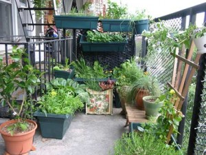 edible-balcony-garden