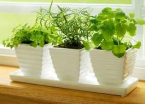 new-herb-garden