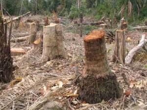 deforestation_bolivia