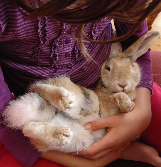 house-rabbit