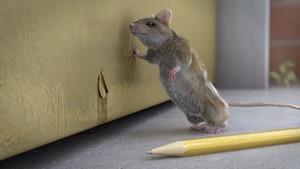 rentokil_mouse
