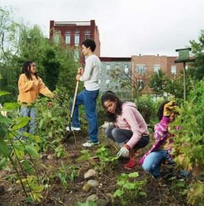 community-garden-transition-town