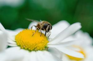 attract bees wildlife garden