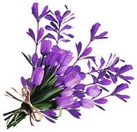 fresh cut organic flowers