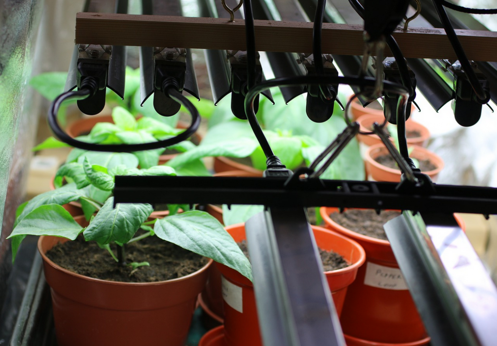 growing plants indoors with lights