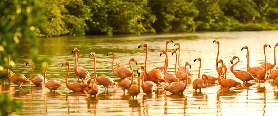 richard branson necker island flamingoes endangered species