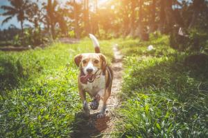 sustainable dog ownership